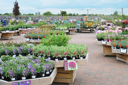 plants for sale at the Haddenham Garden Centre