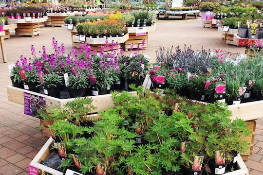 Garden Centre at Haddenham Garden Centre