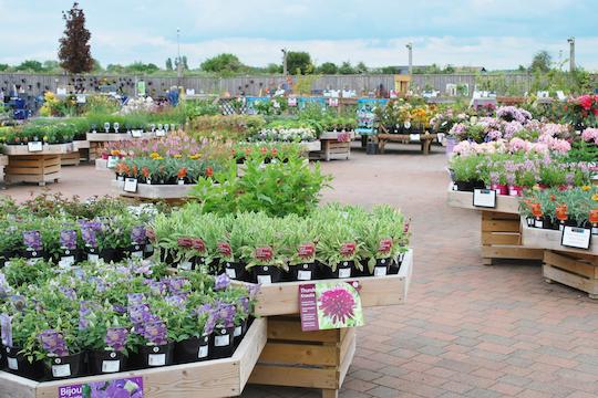 plants for sale at the Haddenham Garden Centre